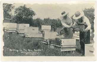 "Postcard, ""Working in the Bee Garden"", North Family, Mount Lebanon, NY, ca. 1915, Shaker Museum 